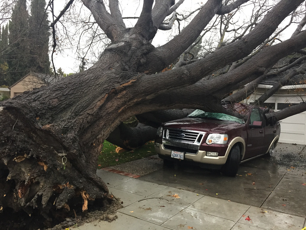 . A huge tree was uprooted and fell onto an SUV parked in the driveway on Boxwood Drive in San Jose. on Thursday.   (Gary Reyes/Bay Area News Group)