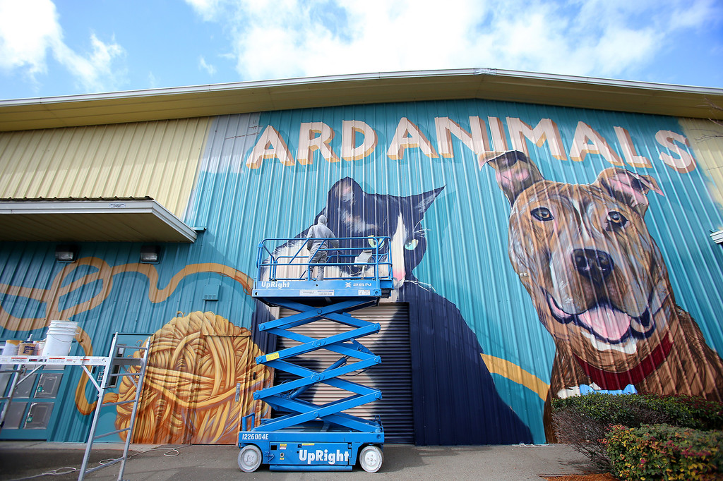 . Artist Wythe Bowart works on a mural at the Hayward Animal Shelter on Thursday, Feb. 7, 2013 in Hayward, Calif. The painting on the front of the shelter will be 30 feet tall and 150 feet wide.  (Aric Crabb/Staff)