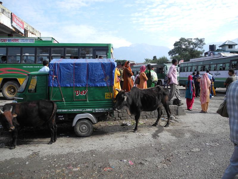 india2011 274.jpg
