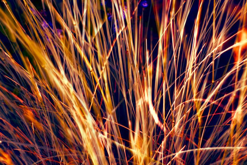 The Grass is Greener at Night F1844.jpg
