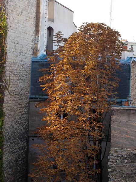 Paris Day 5; Bois de Boulogne