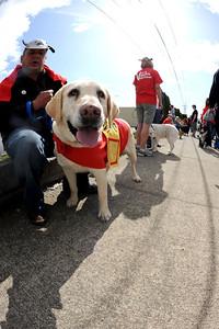 Home At Last Humane Society - Adopt a Dog!