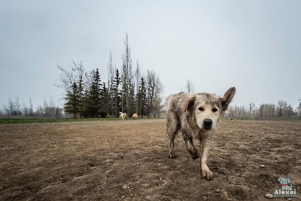 dogparkapril302019