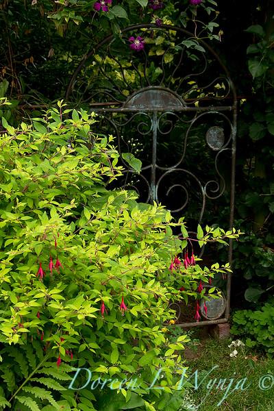 Fuchsia Genii - garden gate_008.jpg