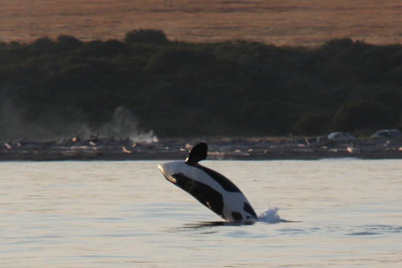 Alaska 2009-909.jpg