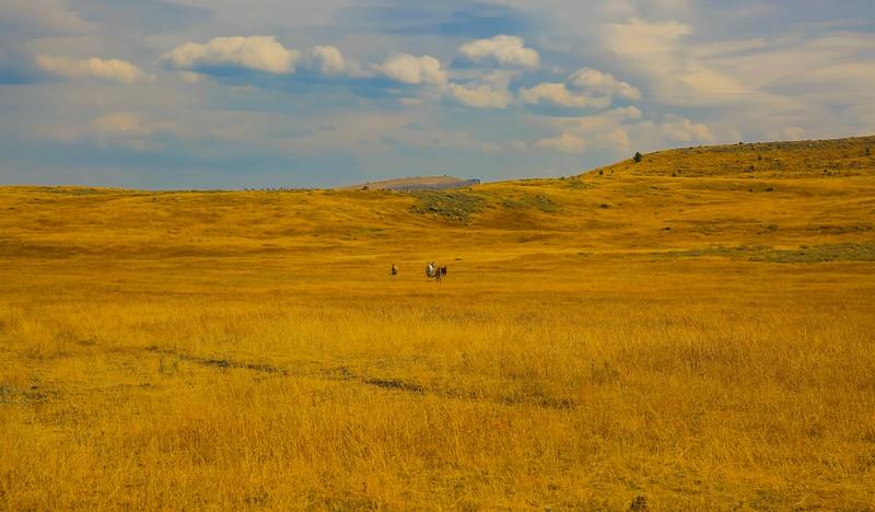 Home on the range.jpg