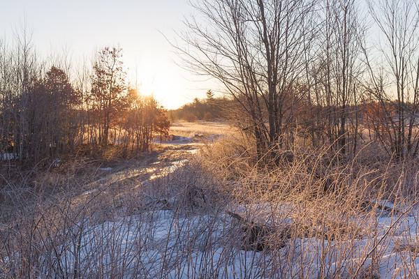 2019-03-23 Woods & Meadows