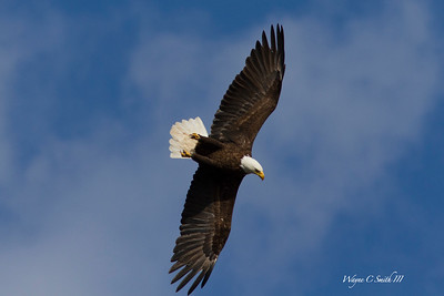 Peace Valley Eagles