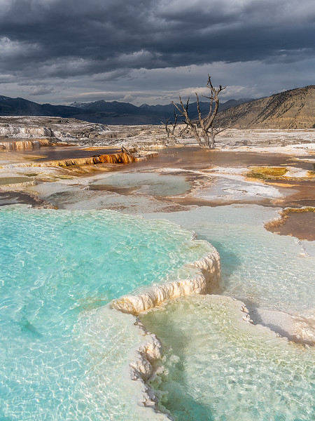 Harold Hall.Yellowstone-Turquoise-Tree.jpg