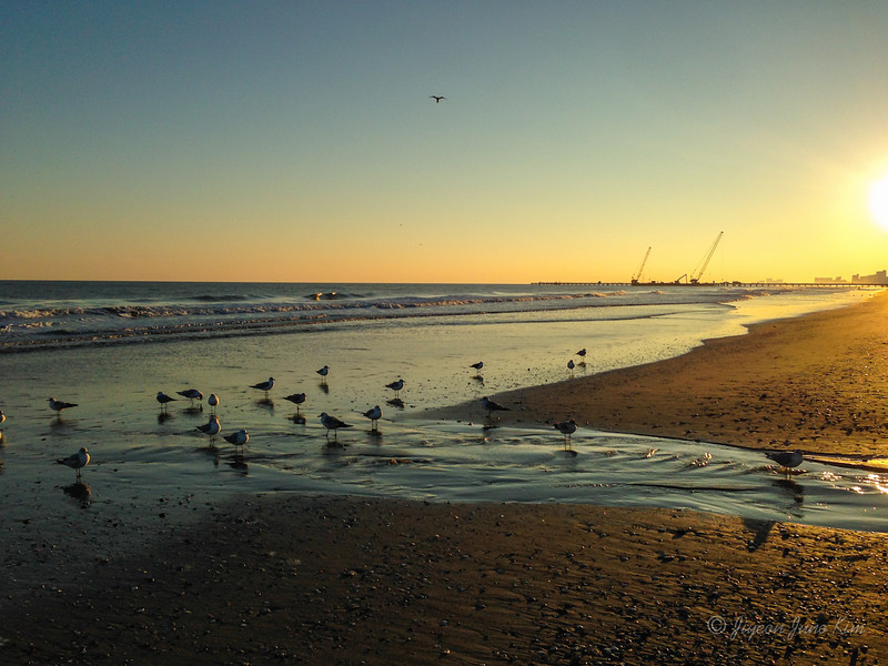 USA-SC-Myrtle Beach-2962.jpg