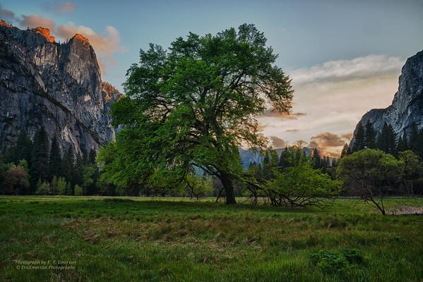 Yosemite in Spring 2014