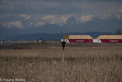 Riefel Bird Sanctuary - 04-03-17