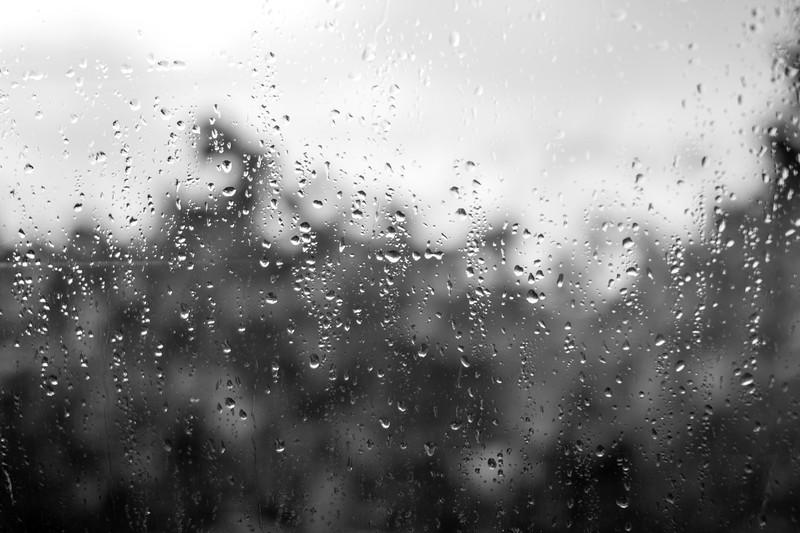 BW Raindrop Fall Trees.jpg