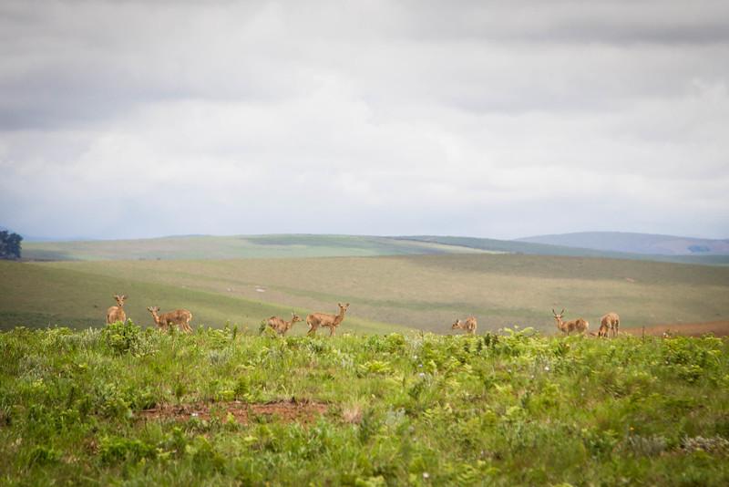 Malawi-149.jpg
