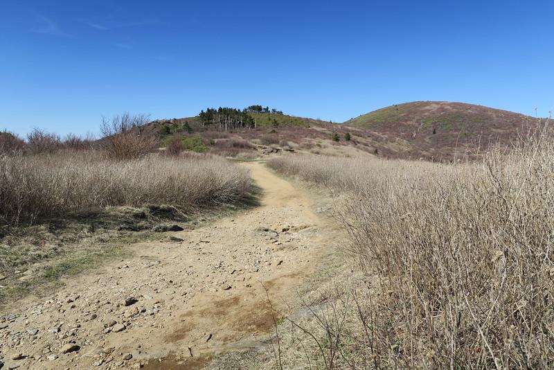 Art Loeb-Ivestor Gap Trail Junction