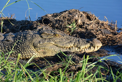 Botswana: Chobe National Park: Day 1: Afternoon River Safari