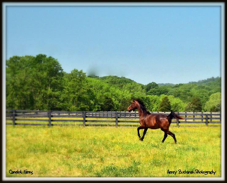 Camelot Farms