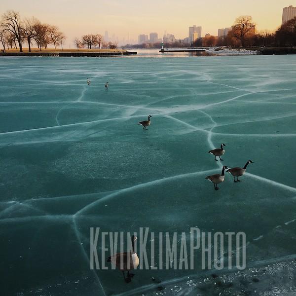 Geese walk a frozen Montrose Harbor