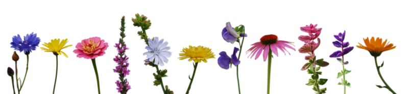 flower_collection_ii_by_eirian_stock-d45rbpc.png