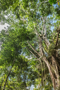 View looking up of Amazon rain forest