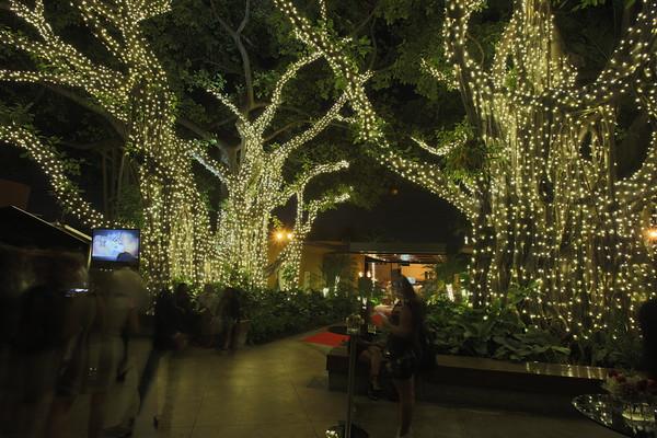 Chima Tree