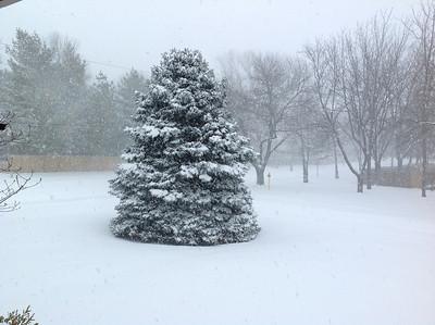 Snow Storm #1 - 2.21.2013