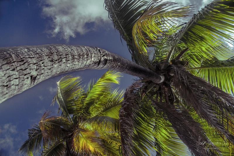 palm tree IMG_0925.jpg