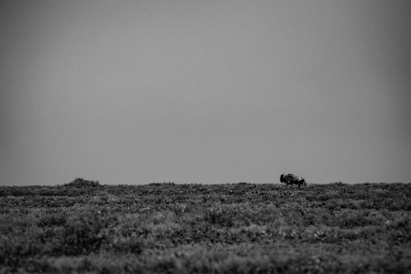Tanzania_Feb_2018-279.jpg