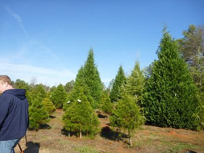 12-03 - Christmas Tree Cutting - Powder Springs, GA