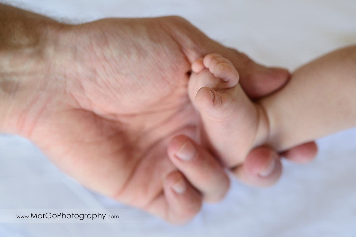 father's hand holding newborn right leg on the white background during family session
