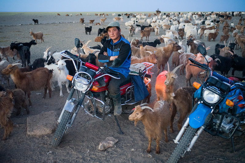 In Mongolia today, goat and sheep herding is increasingly done by motorcycle instead of the traditional Mongolian horse.  June 2017.