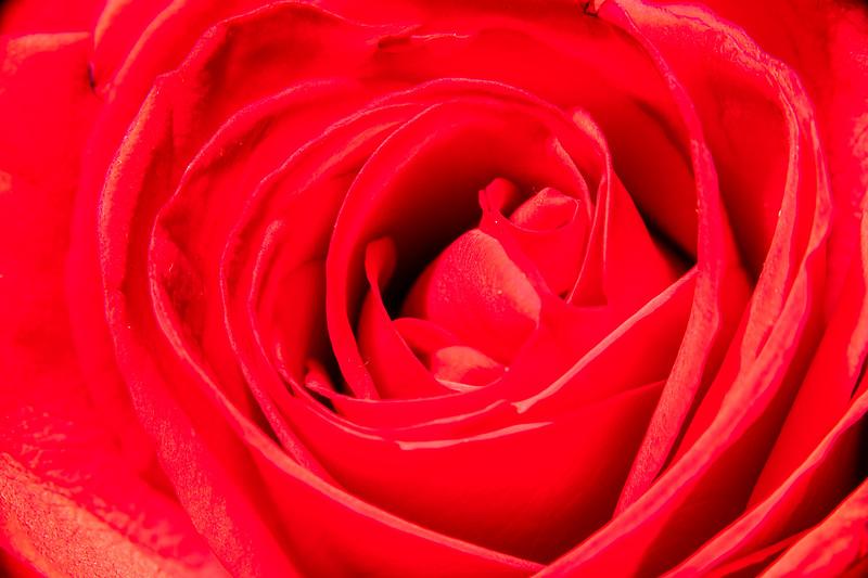 Macro_Flower-8834.jpg