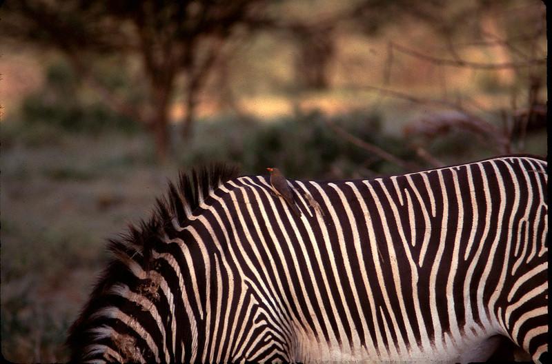 Kenya1_072.jpg