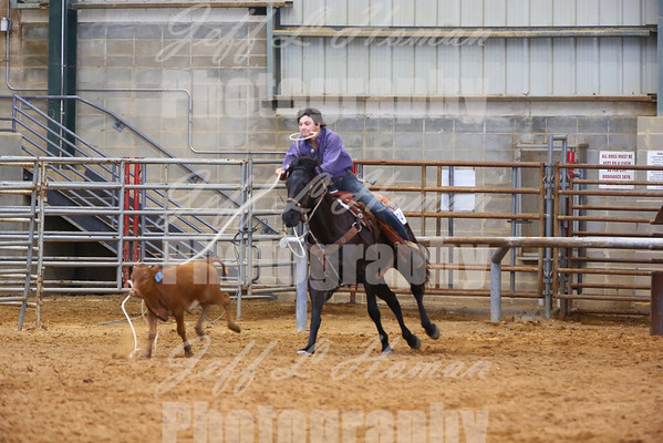 4 H District Horse Shows
