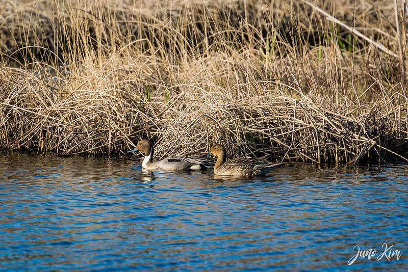 2020-05-12_Potter Marsh bird-_6109487-Juno Kim.jpg