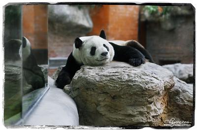 Beijing, Kina 2012 – Beijing Zoo