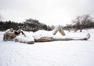 Snow Trolls Morton Arboretum 2019