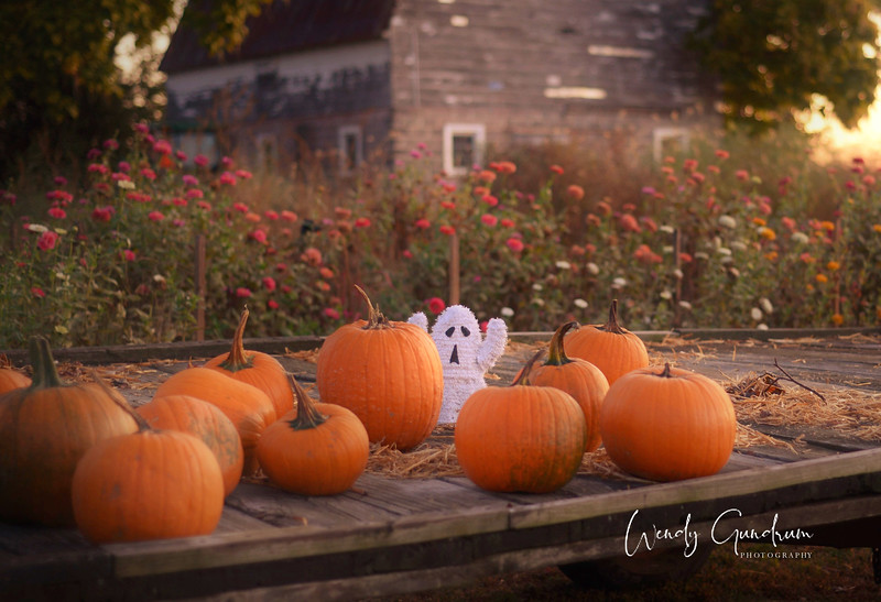 Pumpkin Wagon (2).jpg