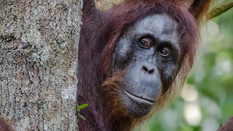 Borneo-2281.jpg