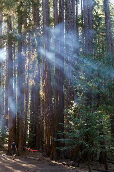 Sequoia_0512.jpg