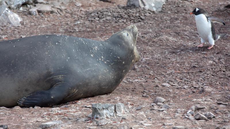 2019_01_Antarktis_01204.jpg