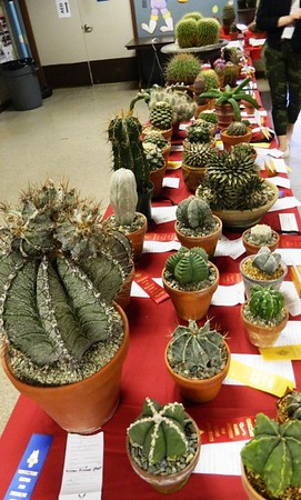 CactusShow-BR-041519 022