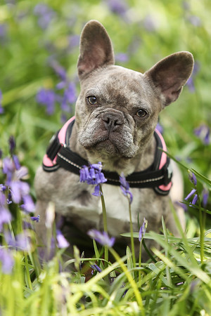 Lilly Bluebell Session
