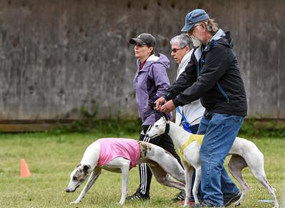 BoB Greyhound