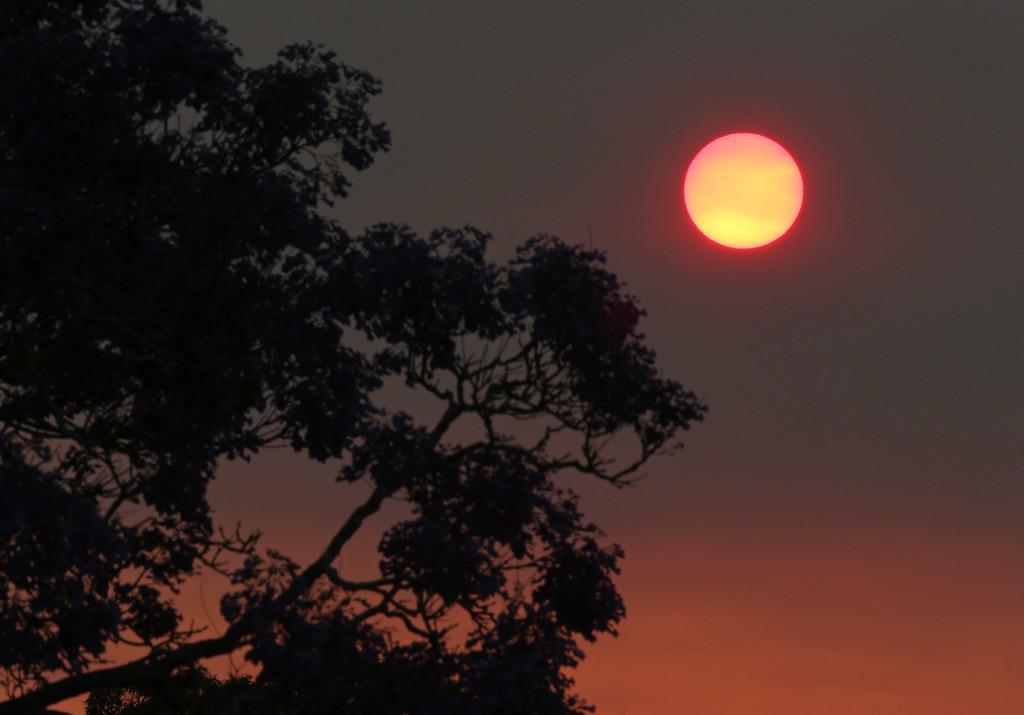 . The sun glows a deep orange color as the light is filtered through smoke haze from wildfires drift over Sydney, Sunday, Oct. 20, 2013. Authorities warned that high temperatures and winds were likely to maintain heightened fire danger for days. (AP Photo/Rick Rycroft)