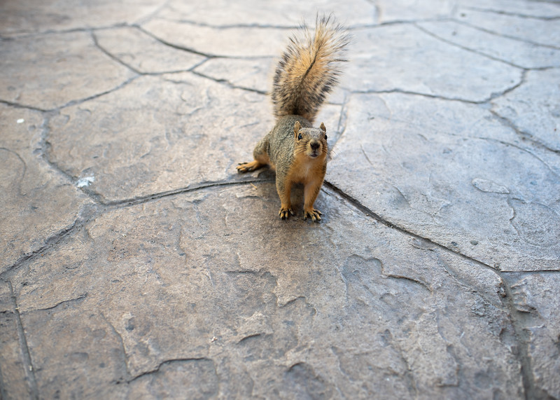 Check out this photogenic campus squirrel!