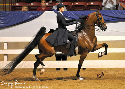 The Saddle Horse Report