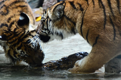 San Diego Zoo - Jan 22, 2012