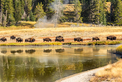 2018 - Yellowstone  / Grand Teton National Park