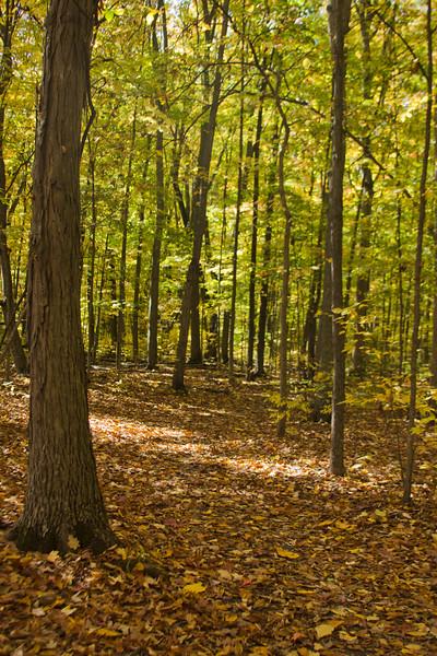 Creasey Bicentennial Park Digital 35mm